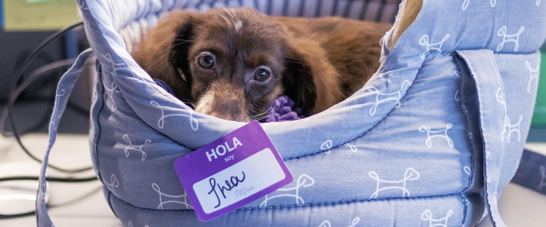 La mascota de Nu, Thea, en su cama, mira la camera
